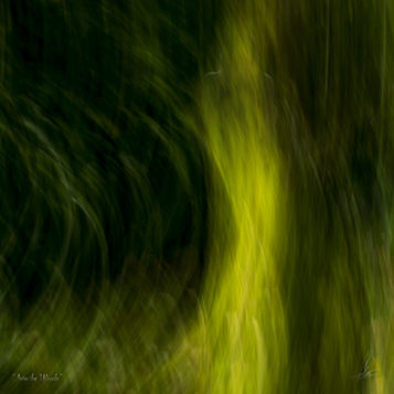 INTO THE WOODS At peace with what lies behind us and in anticipation of that what still has to come -Limited Photographic Art by Loek van Walsem -